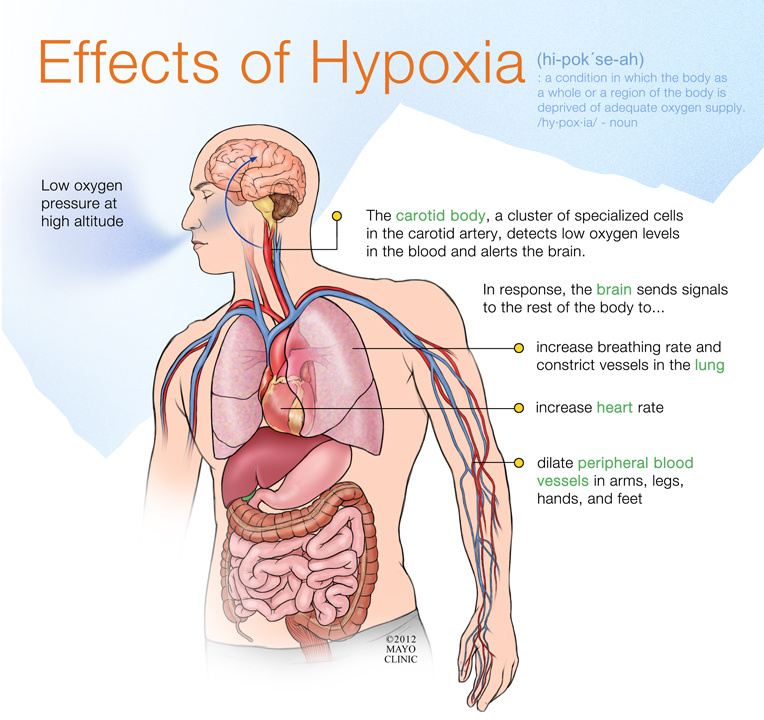 Effects of Hypoxia